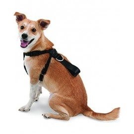 Seat Belt Harness