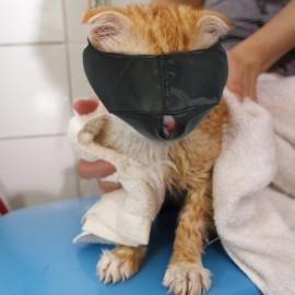 Bozal para gato nylon