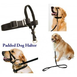 Padded Dog Halter Petmate